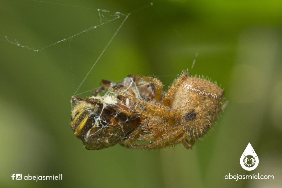 La importancia de conservar especies de abejas y otros organismos